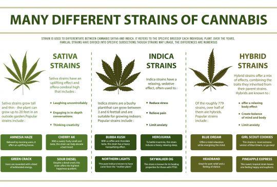 Indica vs Sativa vs Hybrid Cannabis Therapy