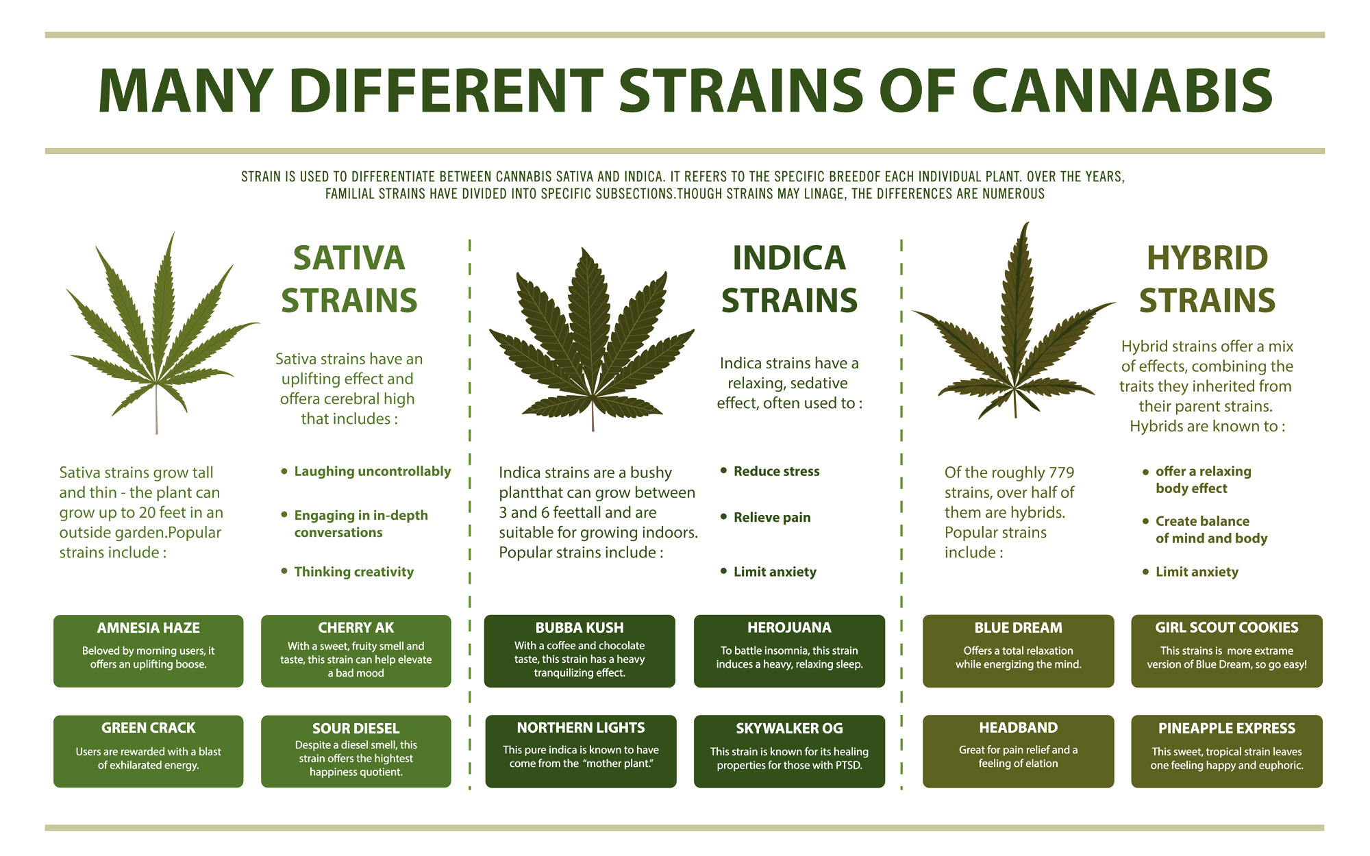 Indica vs Sativa vs Hybrid Cannabis Therapy
